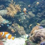 akvarijum u pragu